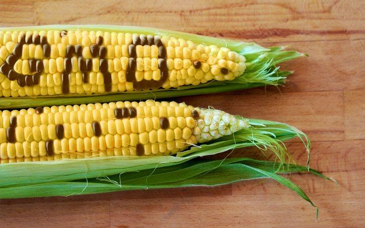 GMO'S, HORMONES & YOU